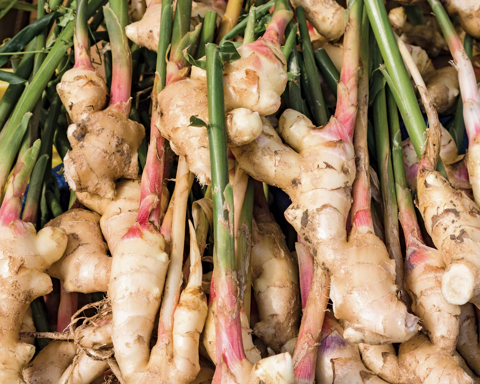Ginger Blaast health-benefits-of-ginger 11 Proven Health Benefits of Ginger (Series: Part 3) Ginger Products Help